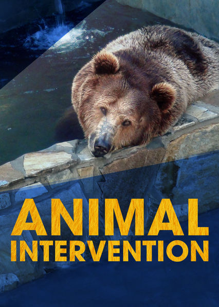 Animal Intervention on Netflix AUS/NZ