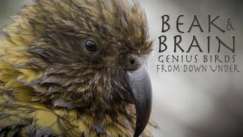 Beak & Brain: Genius Birds From Down Under (2013)