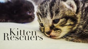 Kitten Rescuers (2017)